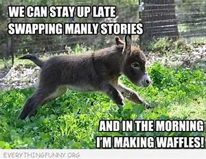 animals dancing funny donkey pictures with captions funny ...