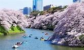 千鳥淵公園_千鳥淵公園介紹_千鳥淵公園地址和門票 - 東京攻略