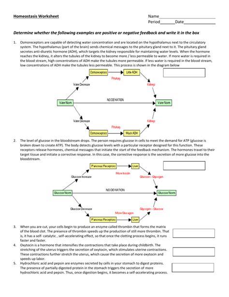usable homeostasis worksheet goodsnyc