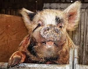 Ugly, And, Disturbing, Animals, 24, Pics
