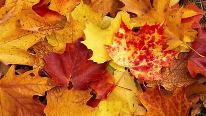 Autumn Leaves Yellow Wallpapers Fall Backgrounds Pixelstalk