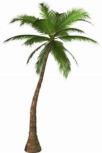 Palm tree PNG images, download free pictures   ต้นไม้ ...
