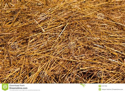 hay texture stock image image  straw plant nature