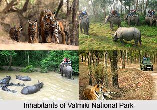 valmiki national park