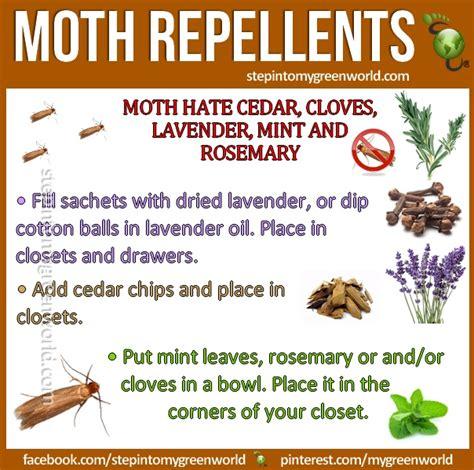 moth repellents great hints