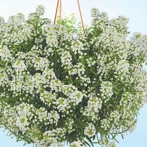 Parterre De Plante : plantes de parterre 8 pcs aldi luxembourg archive des offres promotionnelles ~ Melissatoandfro.com Idées de Décoration