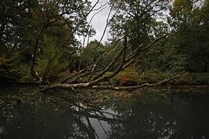 Baum Am Wasser : toter baum am ufer foto bild landschaften wasser ~ A.2002-acura-tl-radio.info Haus und Dekorationen