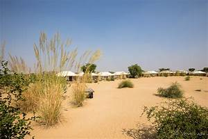 Afternoon in the Great Thar Desert, Rajasthan India