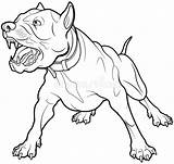 Barking Dog Angry Coloring Bull Drawing Aggressive Pit Terrier Perro Illustrations Dogs Ladrando Hund Guard Drawings Vectors Clip Velichkovsky Anna sketch template