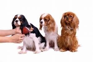 Zecke Entfernen Hund Kopf Steckt : anaplasmose beim hund symptome zecken portal ~ Orissabook.com Haus und Dekorationen