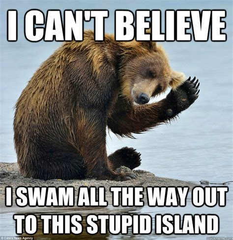 Funny Bear Memes - 34 most funny bear meme pictures