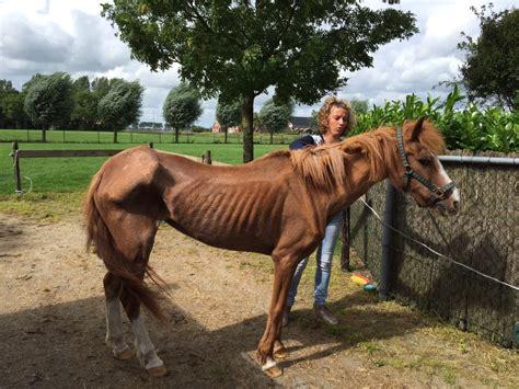 Paard wordt mager