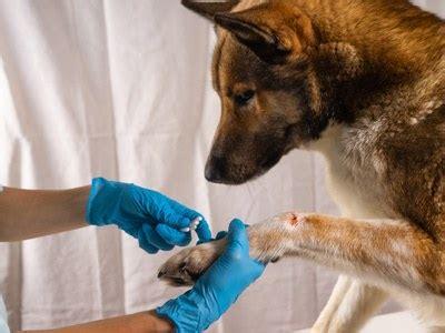 beste hunde op versicherung  vergleich mit schutz bei