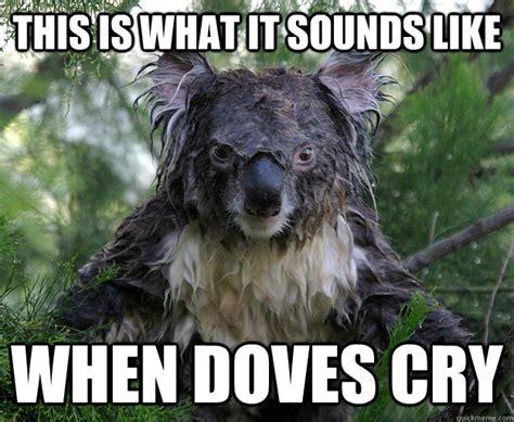 Angry Koala Meme - angry koala is angry memes