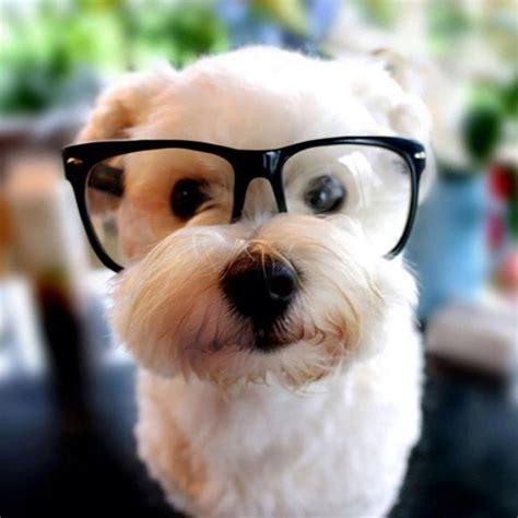 Animals Wearing Glasses Looking Super Cute Xcitefun