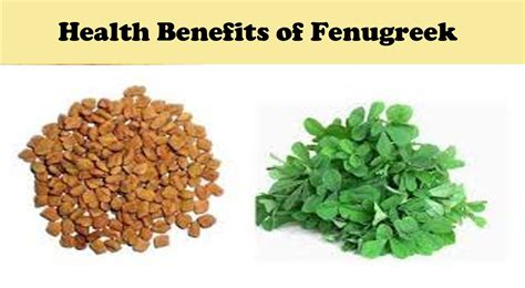 Fenugreek For Weight Loss In Tamil Berry Blog