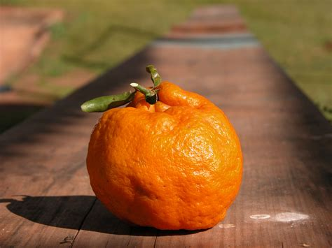clementine cuisine free images food produce vegetable pumpkin tangerine