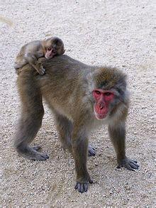 Scimmia Sedere Rosso by Fiabe Giapponesi La Battaglia Granchio E Della Scimmia