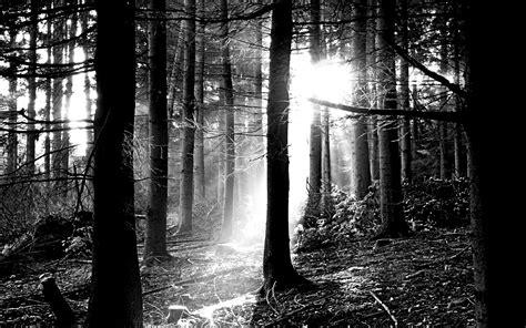 black  white forest wallpaper