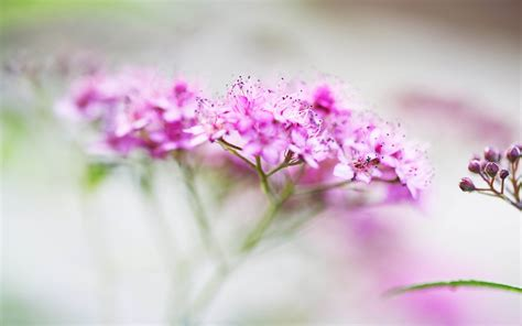 big size wallpapers  flowers gallery