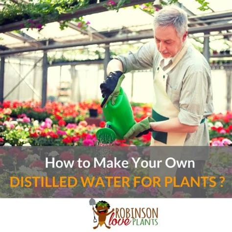 how to make your own water plant guides archives robinson