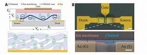 Fast  Flexible Ionic Transistors For Bioelectronic Devices