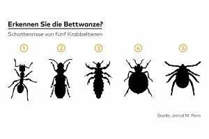 Mücken Im Zimmer Loswerden : m cken news von die welt ~ Lizthompson.info Haus und Dekorationen