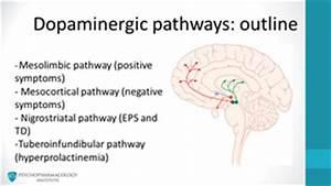 The Four Dopamine Pathways Relevant to Antipsychotics ...