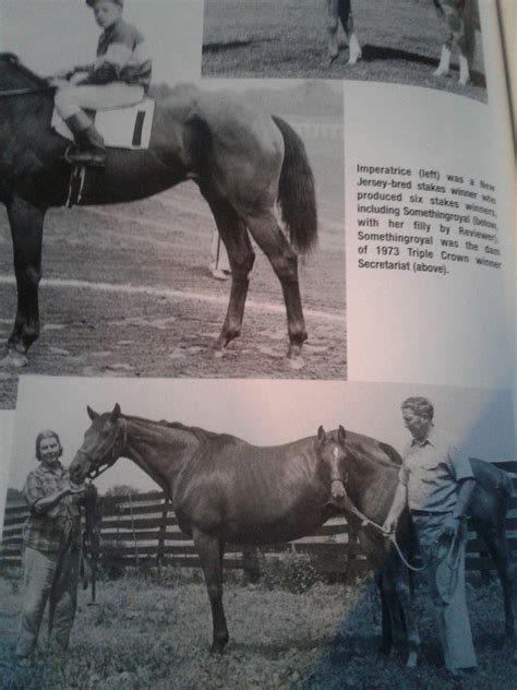 horse called racing chapter somethingroyal dam imperatrice horses race thoroughbred born matriarchs bought found 1976