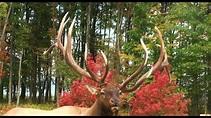 Benezette Pennsylvania Elk and The Pa Wilds - YouTube