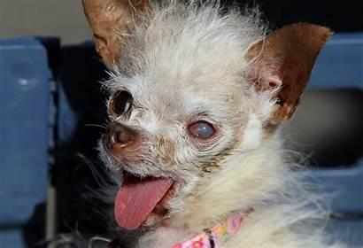 Ugly Dog Desktop Backgrounds Wallpapersafari