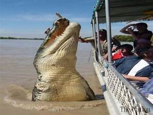 Top 5 World's Biggest Crocodiles - YouTube