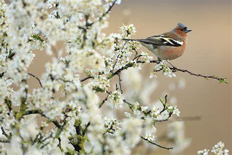 oiseau arbre fleur christophe salin photographe nature