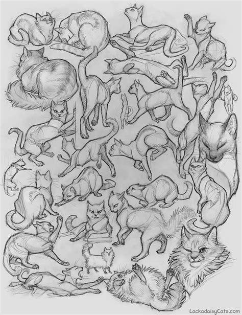 character design cats sketches httpfoxprintscom