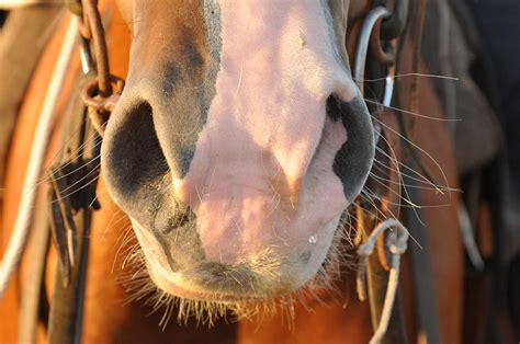 nose teonna horses hodge horse photograph 31st uploaded january which