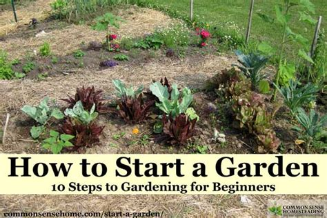 how to start a garden how to start a garden 10 steps to gardening for