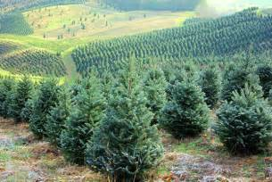 Nc Christmas Tree Farm