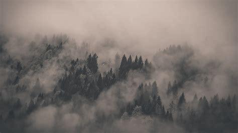 Landscape, Nature, Forest Wallpapers Hd / Desktop And