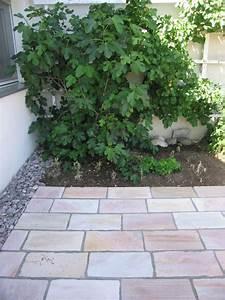 Feigenbaum Im Garten : themen garten yasiflor gartenbau ~ Orissabook.com Haus und Dekorationen