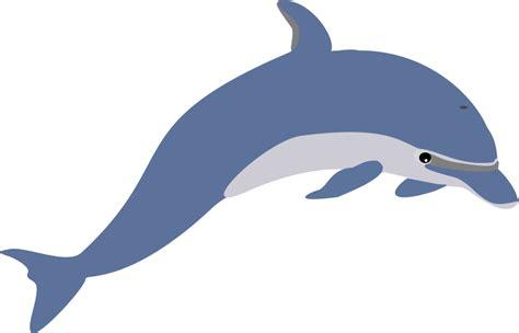 Cartoon Dolphin Png Hd Transparent Cartoon Dolphin Hd.png
