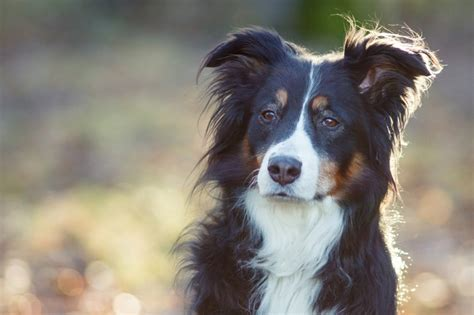 smartest dogs the top 23 smartest dogs in the world dogtime