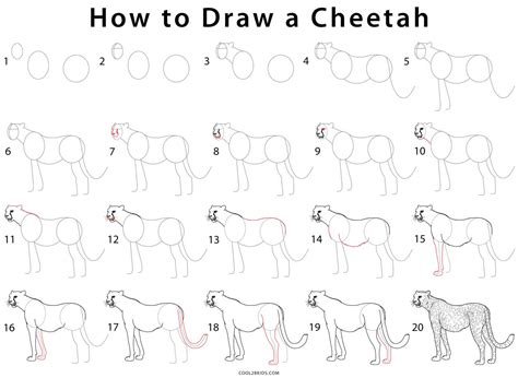 How To Draw A Cheetah (step By Step Pictures) Cool2bkids