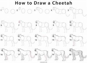How to Draw a Cheetah (Step by Step Pictures) | Cool2bKids