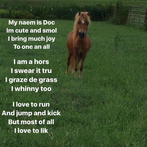 poems horses mini too