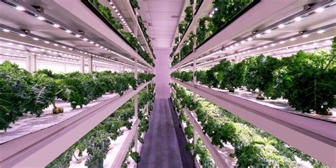Meet Klimazone, a startup boosting vertical farms with ...
