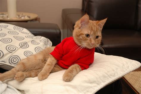 cat sweaters for cats how to knit a cat sweater ebay