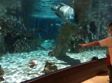 esculturas submersas photo de aquarium sea val d europe marne la vall 233 e tripadvisor