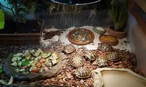 Pflanzen Terrarium Einrichten : haltung der schildkr ten ~ Orissabook.com Haus und Dekorationen