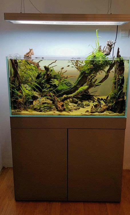 Aquascaping Layouts by 17 Best Images About Aquascape Layout Inspiration On