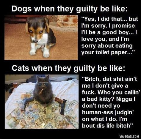 cats dogs better guilty vs than why dog quotes 9gag cat meme funny reasons difference between shit kitty quote they